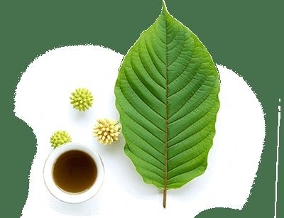 kratom leaves tea defy it